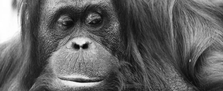 Слайдшоу: Теория Эволюции